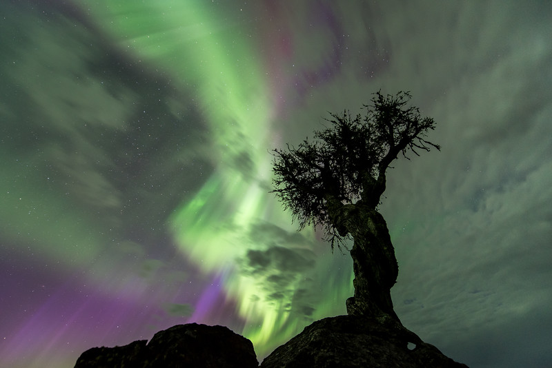 "SUNDAY, MAY 8, 2016<br /> <br /> AURORA 7834<br /> <br /> ""The Tree and the Northern Lights""<br /> <br /> I have photographed this tree many times over the years, including during quite a few aurora displays.  Of those times, I think last night was the most intense aurora storm I've ever witnessed at the tree.  This photograph was made at 3:11 A.M.  There was some cloud cover last night as well but I think that just added to the scene.  It sure made for an unforgettable night!<br /> <br /> Camera: Nikon D750<br /> Lens: Nikon 14-24mm f/2.8<br /> Focal length: 14mm<br /> Shutter speed: 10 seconds<br /> Aperture: f/2.8<br /> ISO: 1600"
