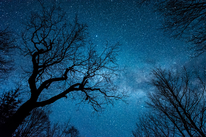 "TUESDAY, MAY 3, 2016<br /> <br /> MILKY WAY 7658<br /> <br /> ""The Magic of the Maple Forest""<br /> <br /> A photograph of the Milky Way Galaxy over my new favorite maple tree :-)<br /> <br /> Camera: Nikon D750<br /> Lens: Nikon 14-24mm f/2.8<br /> Focal length: 24mm<br /> Shutter speed: 20 seconds<br /> Aperture: f/2.8<br /> ISO: 10,000"