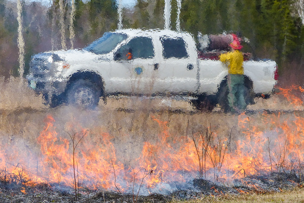 "SUNDAY, MAY 1, 2016<br /> <br /> GRAND PORTAGE 1080653<br /> <br /> ""Fire Season""<br /> <br /> It is once again the season of the prescribed burn!  For the past week or so the local fire crew has been going around the village and burning some of the ditches and meadows, as they do each spring.  Prescribed burning is done to reduce excessive amounts of brush and shrubs and encourage new growth of native vegetation.  It also helps maintain many plant and animal species whose habitats depend on periodic fire.  Not to mention helping to reduce the sometimes catastrophic effects of wildfire.  Grand Portage has a very good wildfire crew that each year does prescribed burning around the Grand Portage Reservation.  Members of the crew also help fight wildfires and do prescribed burns in areas all over the country.  Thanks guys for all the work that you do!<br /> <br /> Camera: Panasonic DMC-FZ200<br /> Focal length: 245mm<br /> Shutter speed: 1/1600<br /> Aperture: f/4.5<br /> ISO: 200"
