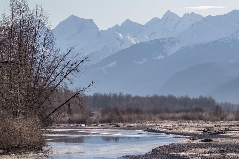 "WEDNESDAY, MAY 4, 2016<br /> <br /> ALASKA EAGLES 8995<br /> <br /> ""Sunny Afternoon in the Valley of the Eagles""<br /> <br /> Chilkat River - Haines, Alaska<br /> <br /> Last night I was looking through photos from our November 2014 trip to Alaska.  I came across this one that I had somehow missed when picking favorites upon returning home from the trip.  This photo really shows the majesty of the Chilkat River Valley, also known as ""The Valley of the Eagles"".  You can see an eagle perched in the tree near the center of the photo.  There are a few others in the trees far off in the distance as well, but you can't see them unless viewing the original photo at full size.  There is also an eagle nest blending in with the distant tree line.  Seeing this photo really makes me want to go back to Alaska!<br /> <br /> Camera: Canon EOS 7D Mark II<br /> Lens: Tamron SP 150-600mm<br /> Focal length: 150mm<br /> Shutter speed: 1/1600<br /> Aperture: f/8<br /> ISO: 400"