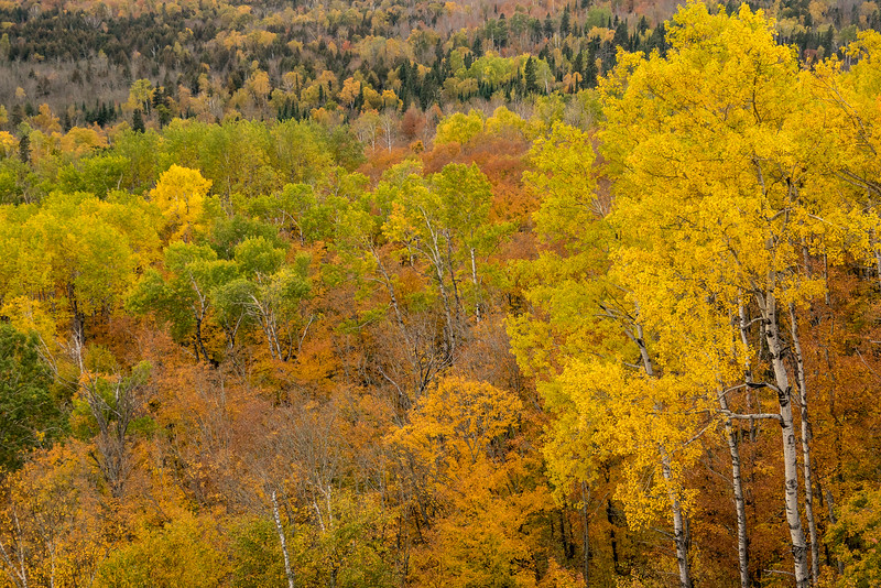 """SATURDAY, OCTOBER 8, 2016<br /> <br /> AUTUMN 01629<br /> <br /> """"A Cornucopia of Color""""<br /> <br /> A nice variety of fall color blankets the hillside adjacent to Leveaux Mountain in Lutsen, MN.<br /> <br /> Camera: Sony DSC-RX10M3<br /> Focal length: 63mm<br /> Shutter speed: 1/250<br /> Aperture: f/4<br /> ISO: 400"""