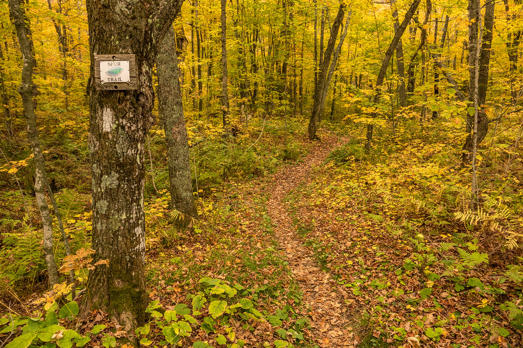 "FRIDAY, OCTOBER 7, 2016<br /> <br /> AUTUMN 01596<br /> <br /> ""The Spur to Leveaux Mountain""<br /> <br /> It sure has been a beautiful week in the maple forests of northern Minnesota!  This is a Superior Hiking Trail sign marking the spur to Leveaux Mountain off the main trail.  Anyone who's spent any time on the SHT will be very familiar with these signs :-)<br /> <br /> Camera: Sony DSC-RX10M3<br /> Focal length: 24mm<br /> Shutter speed: 1/125<br /> Aperture: f/4<br /> ISO: 400"