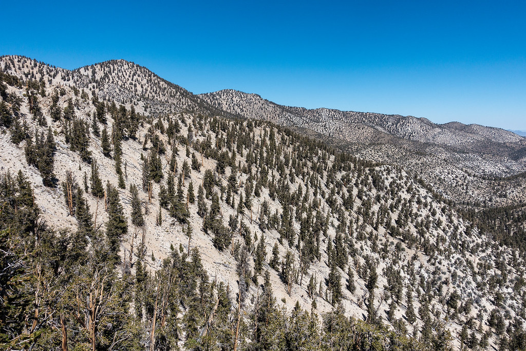 "FRIDAY, SEPTEMBER 23, 2016<br /> <br /> CALIFORNIA 03240<br /> <br /> ""Ancient Bristlecone Forest""<br /> <br /> Schulman Grove, White Mountains<br /> <br /> Camera: Sony DSC-RX100M3<br /> Focal length: 24mm<br /> Shutter speed: 1/800<br /> Aperture: f/5.6<br /> ISO: 100"