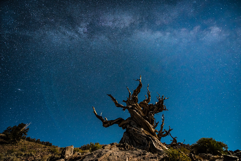 "SATURDAY, SEPTEMBER 24, 2016<br /> <br /> CALIFORNIA 9777<br /> <br /> ""Milky Way and Moonlight over Ancient Bristlecone""<br /> <br /> Well, this was one of my bucket list items in terms of photography.  Photographing the night sky over the Ancient Bristlecones was a dream come true.  Ever since first hearing about these trees a long time ago I've wanted to visit them.  It was awesome, to say the least, to finally be able to see them and bask in their presence.  At night the trees take on a whole other magical feel.  I can't wait to go back and photograph them more at night.  I think I need to move to California... that way I can spend lots of time with them :-)  <br /> <br /> One of the things that was really amazing and totally different than back home in Minnesota is how many stars we could see even with the bright light of a half-moon.  The clear air up at 10,000 feet sure makes a difference in that respect.  With this kind of moonlight in northern Minnesota you wouldn't see nearly this many stars.  We could even see the ribbon of the Milky Way Galaxy clearly in the sky.  That basically never happens in Minnesota. If you've got moonlight in Minnesota, you can't see the ribbon of the Milky Way except for a little while when the moon first rises. Once it's high up in the sky, you really can't see the Milky Way.  Anyway, I hope you enjoy these images.  I sure had a lot of fun making them :-)<br /> <br /> Camera: Nikon D750<br /> Lens: Nikon 14-24mm f/2.8<br /> Focal length: 14mm<br /> Shutter speed:  20 seconds<br /> Aperture: f/2.8<br /> ISO: 1600"
