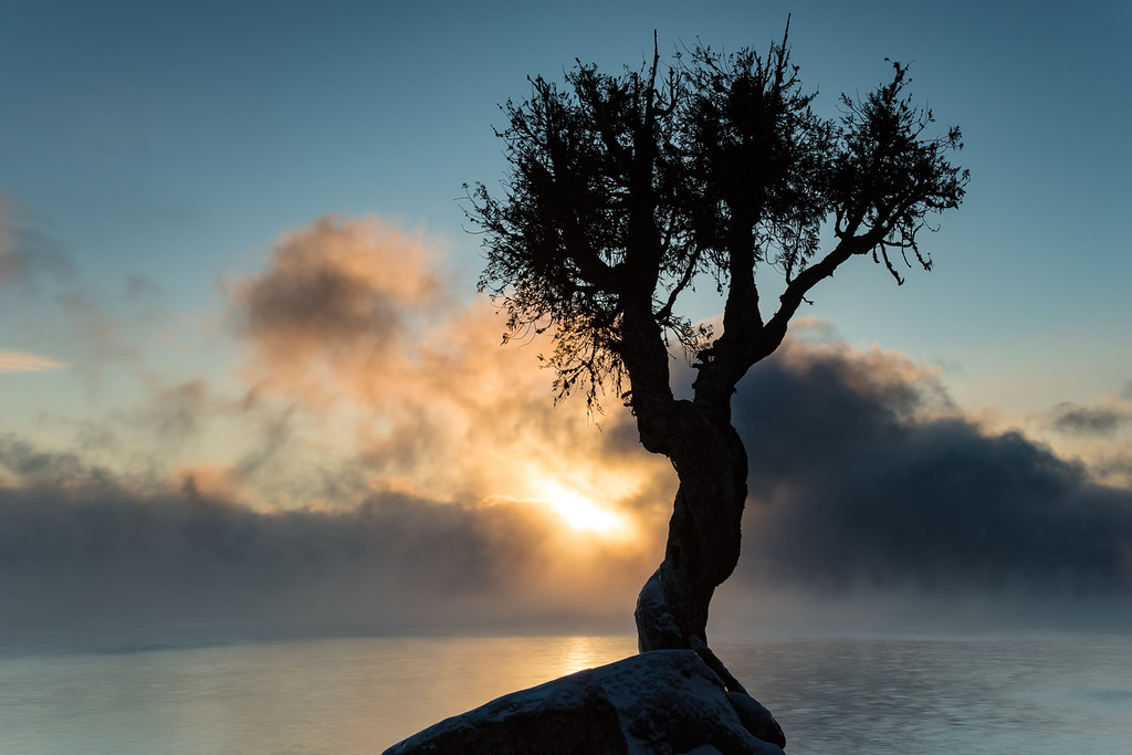 """Sea Smoke and the Spirit Tree"""
