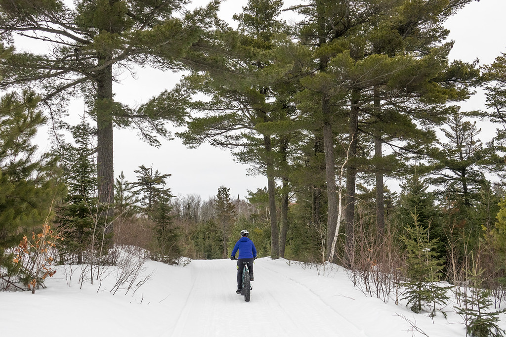 """FRIDAY, JANUARY 27, 2017<br /> <br /> BIKING 00235<br /> <br /> """"Pedaling Past Ancient Pines""""<br /> <br /> Since we were riding down into a river valley, that meant the ride out is quite a bit of climbing.  Thankfully, that climbing is mostly pretty gradual.  The slower pace of pedaling a fat bike uphill on snow means that you have more time to enjoy the scenery.  And the scenery is beautiful along this route, as you can see by the giant pine trees we rode past.  Fat bike rides are always fun, but even more so when you have the perfect snow to ride on!<br /> <br /> Camera: Sony DSC-RX10M3<br /> Focal Length: 31mm<br /> Exposure Time: 1/640<br /> Aperture: f/4<br /> ISO: 400"""