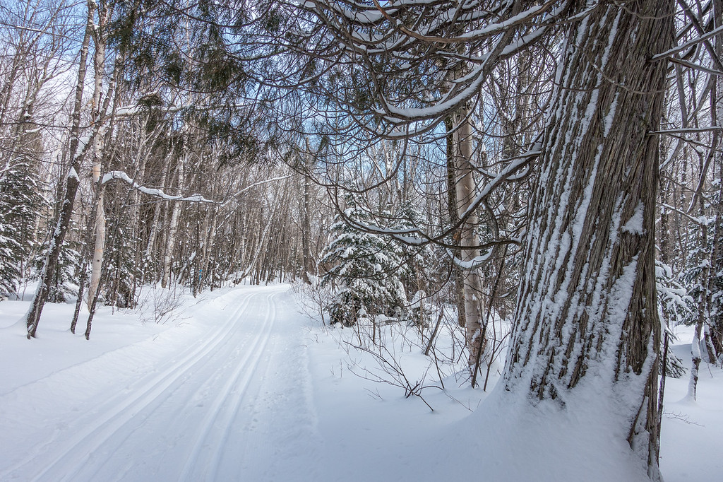 """SUNDAY, JANUARY 8, 2017<br /> <br /> CROSS COUNTRY SKI 04746<br /> <br /> """"Big Cedar along the Deer Yard Ski Trails""""<br /> <br /> Cook County, MN - While out on a recent ski outing we did the main loop on the Deer Yard Ski Trails.  It was my first time skiing this trail and I was blown away by the beauty of the trail corridor!  So many beautiful trees and curves along the trail.  My ski companions were getting a bit frustrated waiting for me because I was stopping so much to take pictures along the way.  I couldn't help myself... it was a perfect day for skiing and around almost every corner of the trail I would see another composition that I wanted to photograph.  The photo shown here is one of my favorites from the day.  I just loved this giant cedar right along the edge of the trail and the way the snow was clinging to its trunk. <br /> <br /> Camera: Sony DSC-RX100M3<br /> Focal Length: 24mm<br /> Exposure Time: 1/800<br /> Aperture: f/3.5<br /> ISO: 200"""