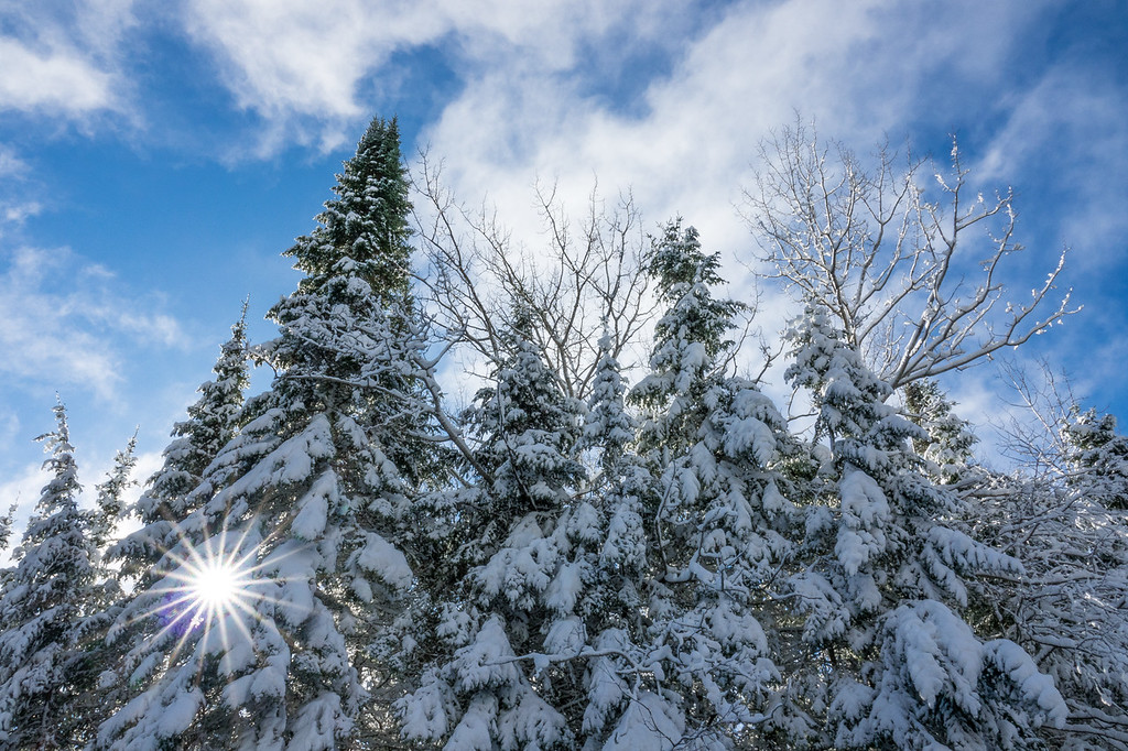 """SATURDAY, OCTOBER 28, 2017<br /> <br /> FOREST 06914<br /> <br /> """"Beautiful October Snow!""""<br /> <br /> So I was in the post office today and there was a woman at the counter talking with the postmaster and every word coming out of her mouth was about how much she couldn't stand the winters here (for those that don't know, we had some nasty weather the last few days which left us with some really beautiful snow).  She actually said """"Who would want to continue living in this HELL???""""  I looked at her and said """"Ummmmm.... I do... it's beautiful here!""""  After that encounter I took a drive up in the woods and within 10 minutes of leaving the post office I came across this beautiful scene with the sun shining through the trees blanketed in snow.  If hell is this beautiful, heaven must be AMAZING!<br /> <br /> Camera: Sony DSC-RX10M3<br /> Focal Length: 24mm<br /> Exposure Time: 1/100<br /> Aperture: f/16<br /> ISO: 100"""