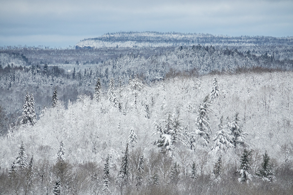 """TUESDAY, OCTOBER 31, 2017<br /> <br /> FOREST 07126<br /> <br /> """"Frosted Forest""""<br /> <br /> Grand Portage, MN - An early snow storm blanketed northern Minnesota with as much as 8 to 12 inches of wet snow on October 28, 2017.  The scenery after the storm was unbelievably beautiful!<br /> <br /> Camera: Sony DSC-RX10M3<br /> Focal Length: 600mm<br /> Exposure Time: 1/800<br /> Aperture: f/5.6<br /> ISO: 200"""