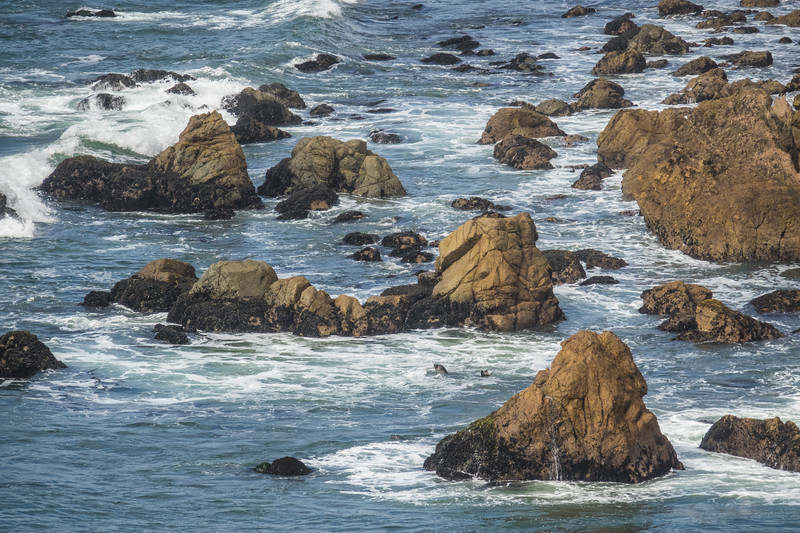 """SUNDAY, SEPTEMBER 24, 2017<br /> <br /> CALIFORNIA 05989<br /> <br /> """"Sea Lion Surf""""<br /> <br /> I loved this view of the coast at Point Reyes National Seashore in California.  As were were hiking up on the nearby cliffs we could hear sea lions barking.  At first we couldn't tell where they were, because they were so far away.  After careful examination of the rocks down below using my camera lens zoomed in at 600mm, I finally spotted a few sea lions playing in the surf.  It looked like they were having fun, they were simply hanging out in the water and diving under the waves as they approached shore.  See if you can spot the sea lion in this picture!<br /> <br /> Camera: Sony DSC-RX10M3<br /> Focal Length: 600mm<br /> Exposure Time: 1/1600<br /> Aperture: f/5.6<br /> ISO: 400"""