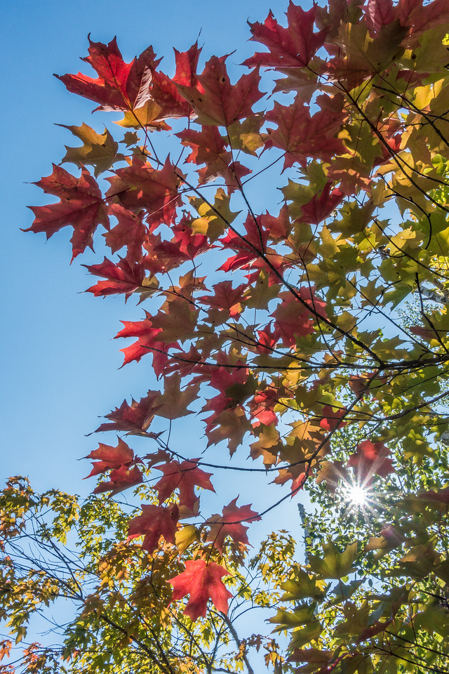 FRIDAY, SEPTEMBER 1, 2017<br /> <br /> AUTUMN 06658<br /> <br /> The leaves they are a-changin'<br /> <br /> Autumn will soon be here in all its glory!  The signs are out there... and they sure are beautiful!<br /> <br /> Camera: Sony DSC-RX100M3<br /> Focal Length: 29mm<br /> Exposure Time: 1/200<br /> Aperture: f/11<br /> ISO: 200