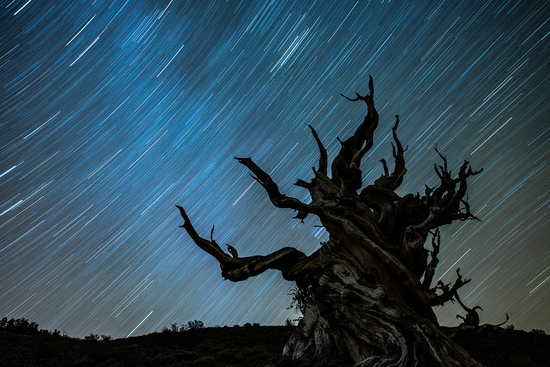 """Bristlecone Pine Star Trails"""