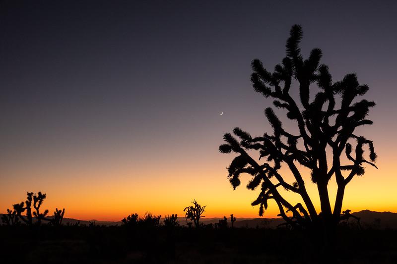 """""""Mojave Desert Sunset"""""""