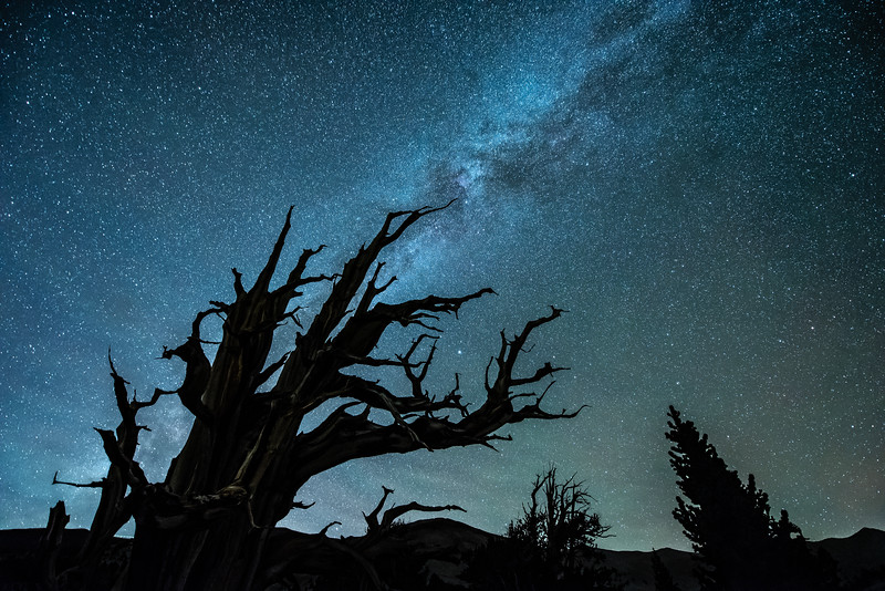 """November Night Sky, Bristlecone Forest"""