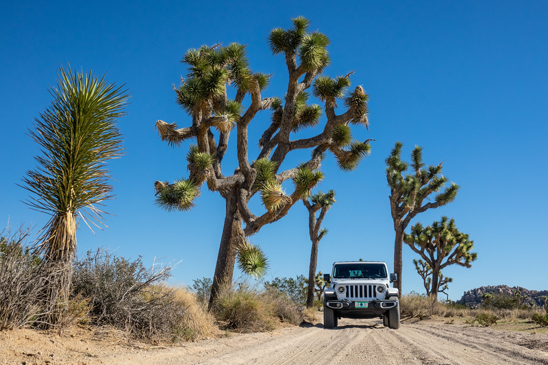 """Jeep and Joshua Trees"""