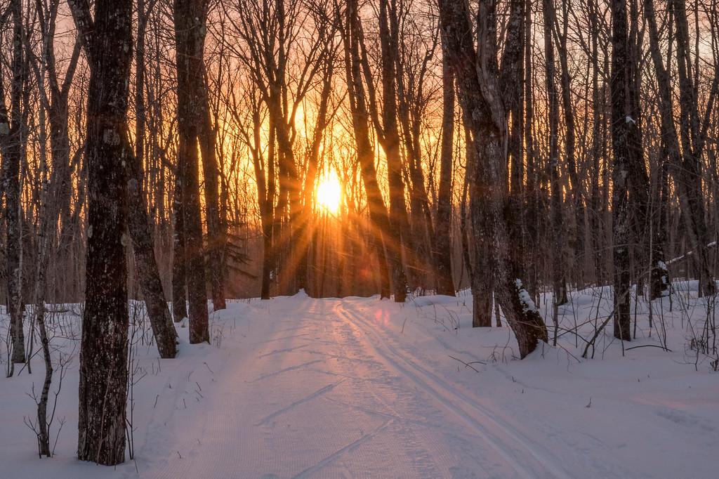 """Sunset on the Maple Loop"""