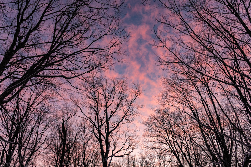 """Sugar Bush Sunset"""