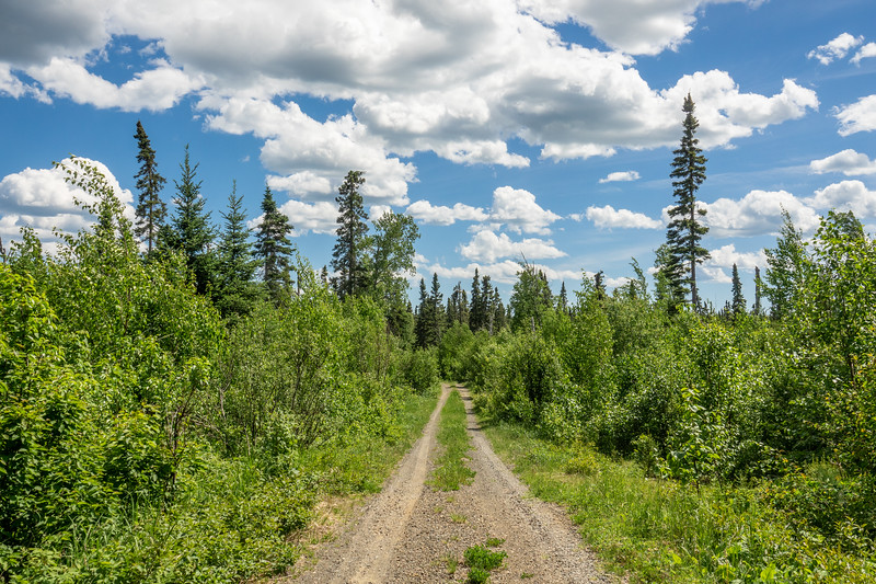 """""""Forest Road Paradise"""""""