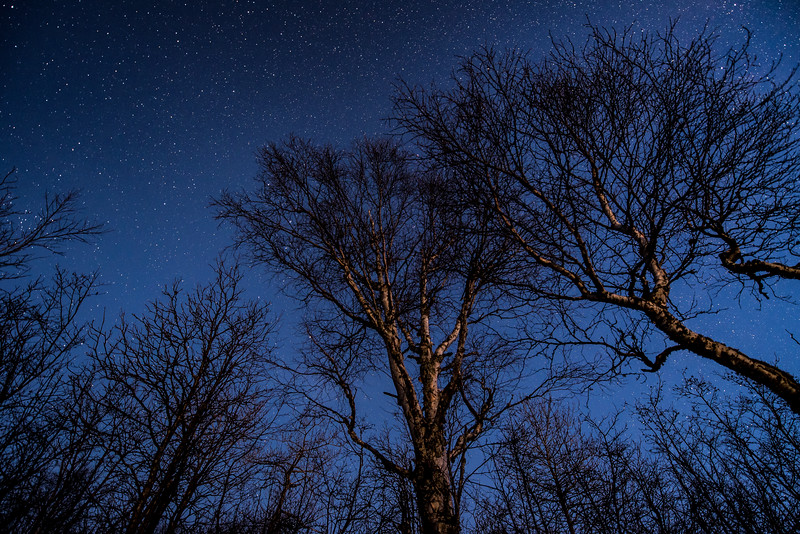 """Moonlit Trees, Starlit Night"""