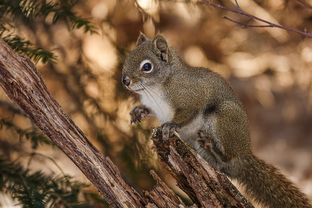 """A squirrel and his den"""