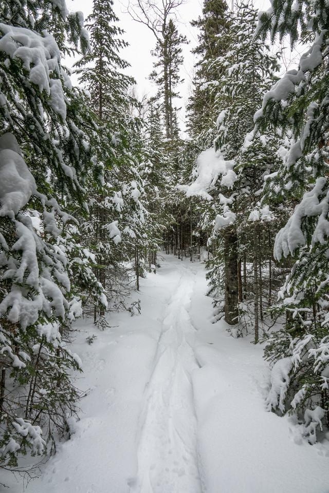 """Snowshoe Trail - Northeast Minnesota"""