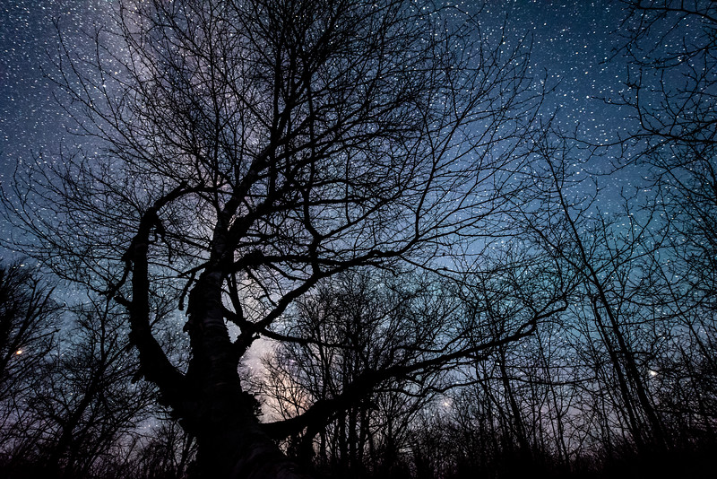 """Spooky Birch and the Milky Way"""