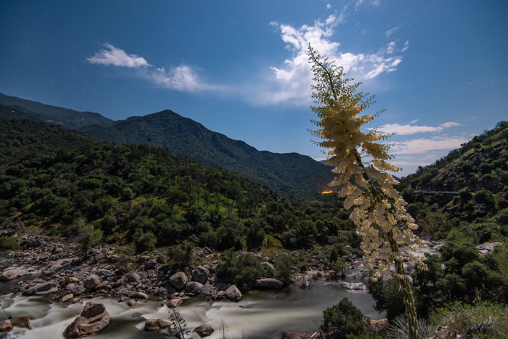 """""""Moonlight Yucca over the Kaweah River"""""""