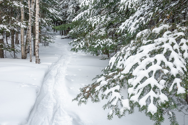"""Snowshoe Hike"""