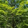 Reichramming - Tal des Holzes