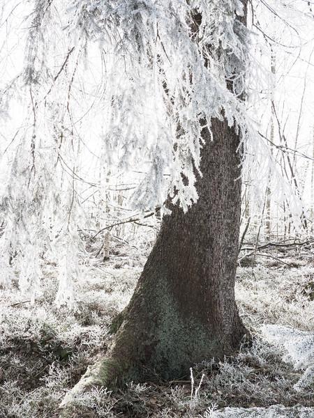 Pürgschacher Moor