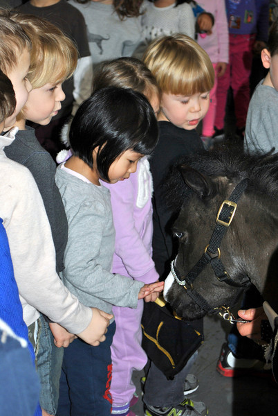 Kindergarten students at Fraser Woods School file by to greet Magic, one of three miniature therapy horses visiting the school on Thursday, January 3. (Crevier photo)