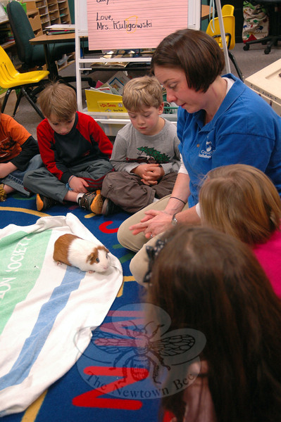 Connecticut Audubon Society teacher and naturalist Tricia Kevalis introduced Henry, a guinea pig, to students in Miryam Kuligowski's kindergarten class on Thursday, January 10. (Hallabeck photo)