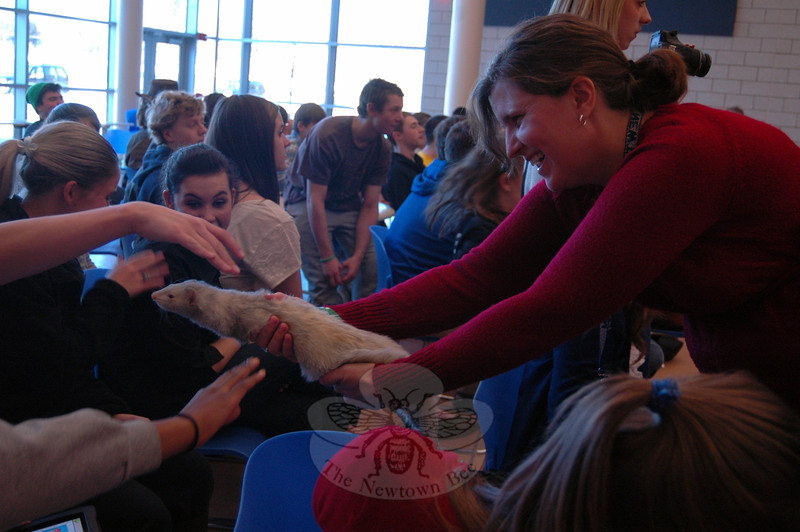 Newtown High School Best Buddies club advisor and special education teacher Jill Gonski carried a visiting ferret from the Beardsley Zoo around to meet students after school on Thursday, January 10. (Hallabeck photo)