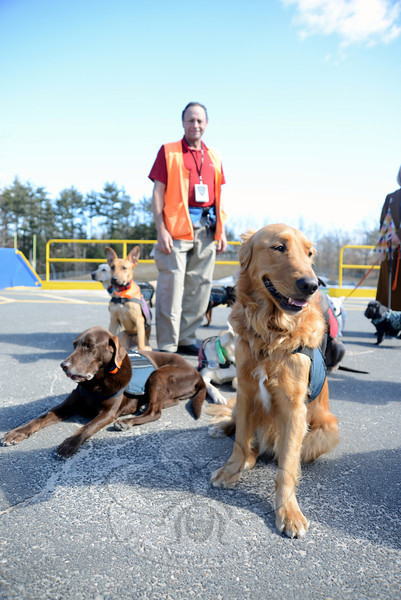 Canine Angels founder Rick Kaplan watched from the background as his diverse mix of service dogs settled after a run around the Newtown High School track Tuesday. (Bobowick photo)