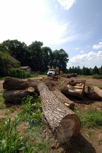 Stumps from downed trees near the duplexes, left, in Fairfield Hills have been chipped and removed as of Wednesday, August 14. The buildings are now visible from Wasserman Way in the area of Reed Intermediate School. (Bobowick photo)