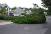 20110828_Hurricane_Tree_Damage_029_out