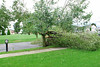 20110828_Hurricane_Tree_Damage_011_out