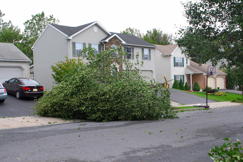 20110828_Hurricane_Tree_Damage_032_out