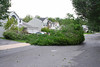 20110828_Hurricane_Tree_Damage_028_out