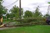 20110828_Hurricane_Tree_Damage_067_out