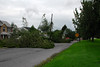 20110828_Hurricane_Tree_Damage_005_out