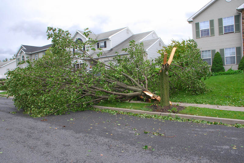 20110828_Hurricane_Tree_Damage_037_out