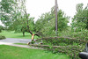 20110828_Hurricane_Tree_Damage_012_out