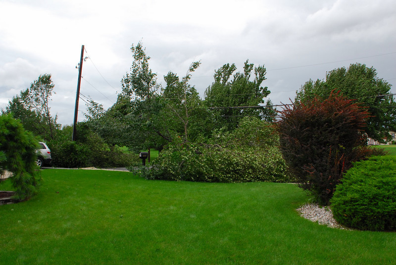 20110828_Hurricane_Tree_Damage_001_out