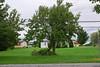 20110828_Hurricane_Tree_Damage_068_out