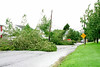 20110828_Hurricane_Tree_Damage_007_out