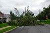 20110828_Hurricane_Tree_Damage_004_out