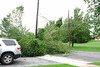 20110828_Hurricane_Tree_Damage_010_out