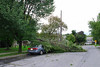 20110828_Hurricane_Tree_Damage_019_out