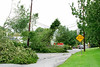 20110828_Hurricane_Tree_Damage_008_out